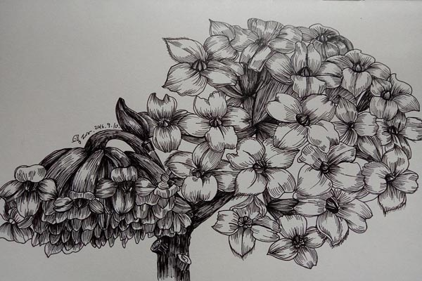 钢笔画图片简单花卉图片大全【28P】