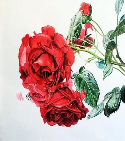 漂亮的玫瑰花彩铅画欣赏