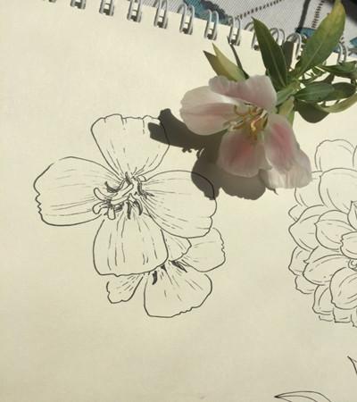 植物写生可临摹的植物写生作品欣赏