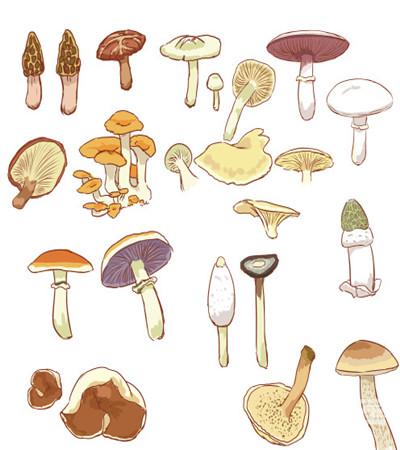 可临摹:各种蘑菇的漫画画法作品欣赏