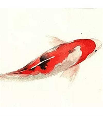 水彩画金鱼绘画步骤