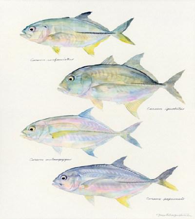 鱼水彩画作品欣赏