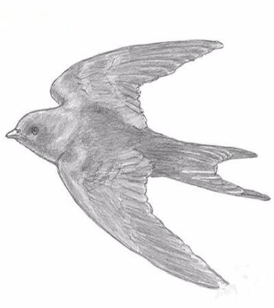 彩铅全身画_素描教程栏目分享人物素描绘画步骤,基础技法讲解,静物素描 ...