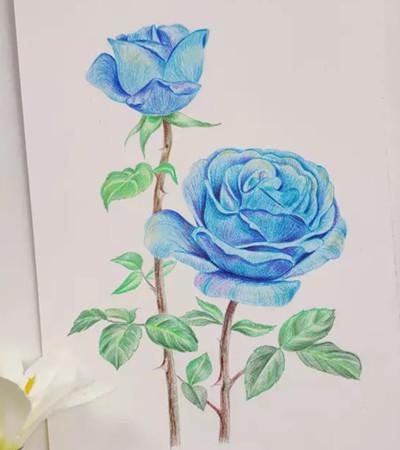 那些花儿彩铅画作品欣赏