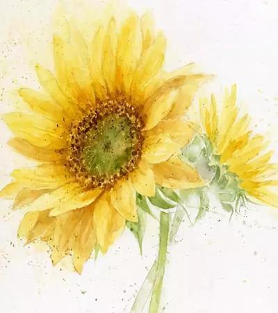 向日葵的水彩畫作品有哪些?向日葵圖片欣賞
