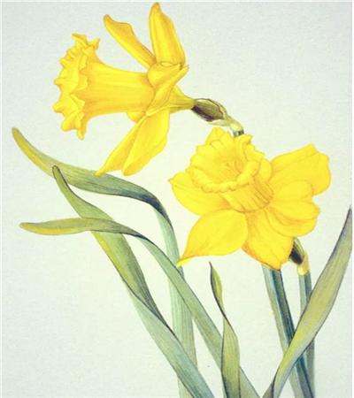 一组花卉作品欣赏,如何画出高清水彩彩铅画?