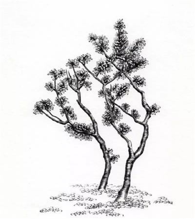 怎么畫兩棵樹?具體的鋼筆畫步驟有哪些?