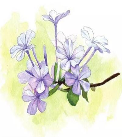 紫色小花怎么畫?一幅畫里多朵花的畫法是什么?