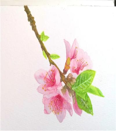 水彩桃花怎么畫?四步教你畫一枝桃花