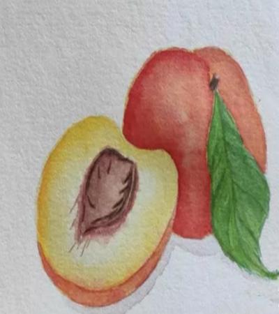 桃子怎么画?具体的水彩步骤有几步?