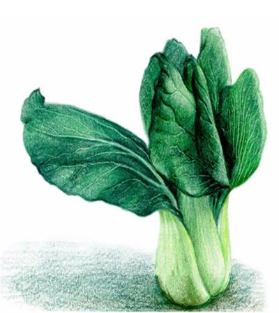 油菜怎么画?详细的绘画步骤有哪些?
