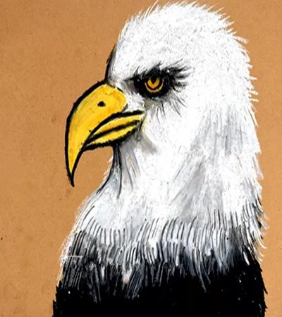 老鹰如何画?儿童画老鹰的教程是什么?