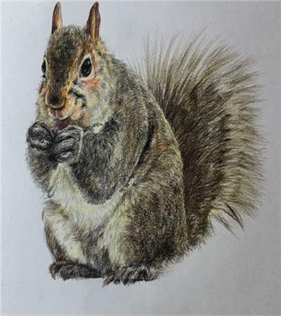 栩栩如生的小松鼠怎么画?超简单的彩铅画教程分享
