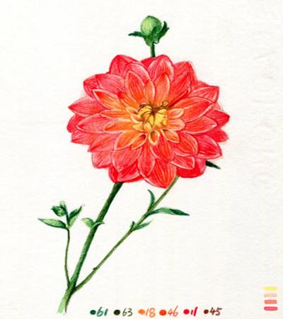 东洋菊怎么画?水彩和彩铅如何结合绘画?