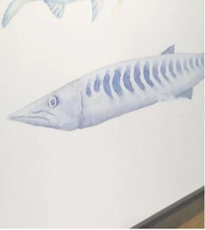 梭鱼怎么画?黑鳍海狼的水彩画步骤有哪些?