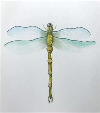 蜻蜓怎么画?蚂螂的水彩画步骤有哪些?