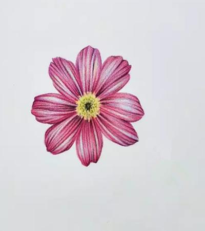 菊花瓣怎么画?如何画花瓣上的纹路?