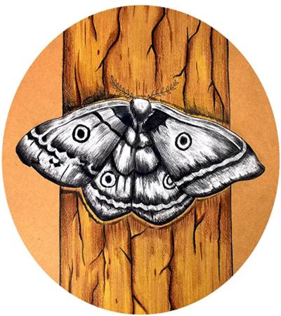 飞蛾怎么画?儿童绘画重点有哪些?