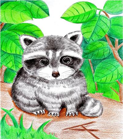 儿童画小浣熊怎么画?教你画一只可爱的小浣熊