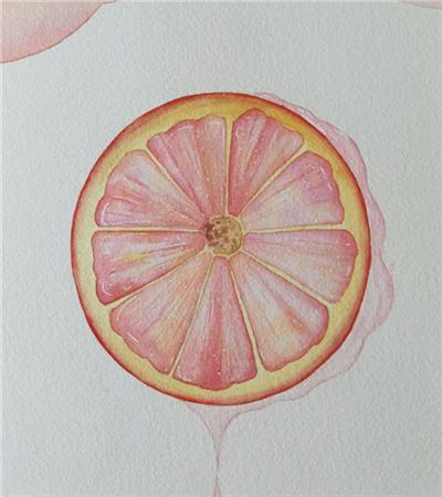 西柚怎么画?如何画一篇写实的西柚?