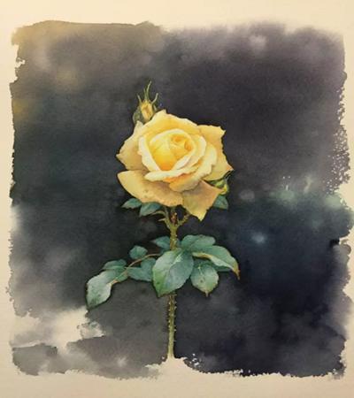 黄色玫瑰花怎么画?黄玫瑰的核心画法是什么?