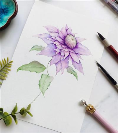 紫色铁线莲怎么画?水彩步骤有几步?