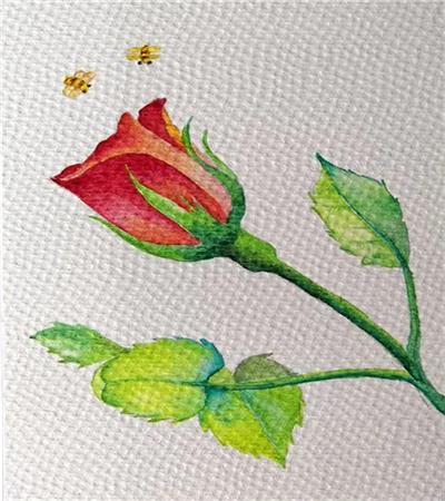 姹紫嫣红月季花怎么画?超级简单的水彩画教程分享
