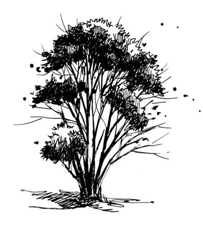 灌木的画法是什么?如何用钢笔画灌木?