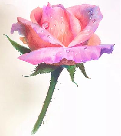 带水珠的玫瑰花怎么画?如何画出娇艳欲滴的花朵?