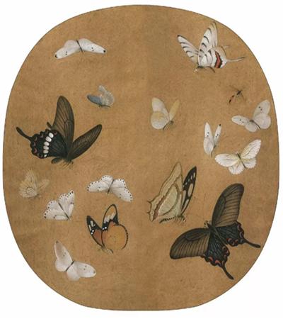 各式各样的蝴蝶怎么画?超级详细的工笔画教程分享