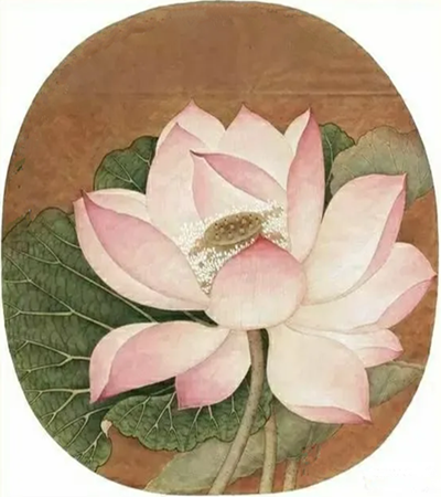 粉色荷花怎么画?出水芙蓉的教程步骤图有哪些?