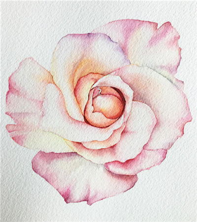 粉色玫瑰花怎么画?如何用湿叠和渗叠?