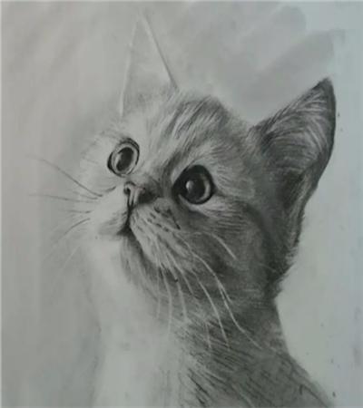 怎么画素描猫咪?小猫的素描画法是什么?