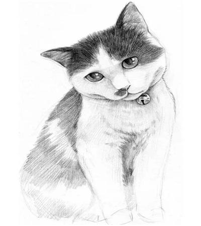 黑白猫咪怎么画?怎样画猫咪毛发?