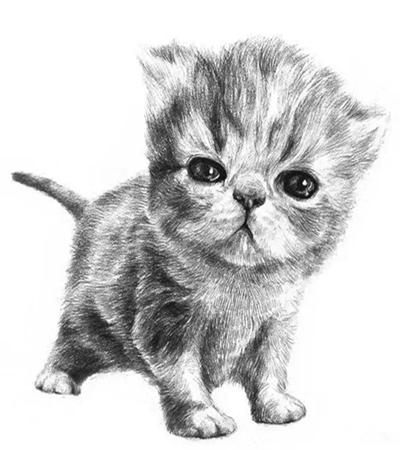 小猫咪怎么画?乖巧的小猫图文步骤有哪些?