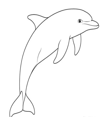 海豚怎么画?简单的海豚画法是什么?
