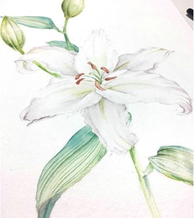百合花怎么画?山丹的水彩步骤有几步?