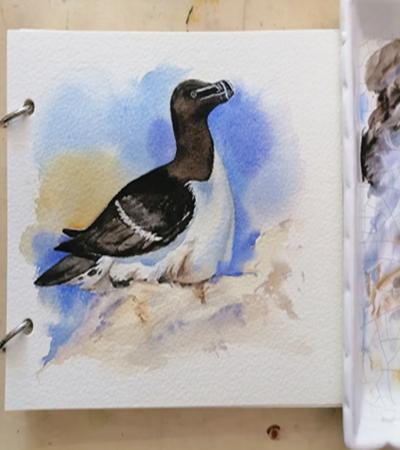 刀嘴海鹊怎么画?小动物水彩画教程是什么?