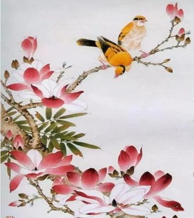 玉兰花上的黄鹂怎么画?详细的图文步骤有哪些?