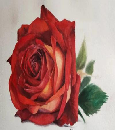 水彩玫瑰怎么画?红玫瑰的水彩步骤有哪些?