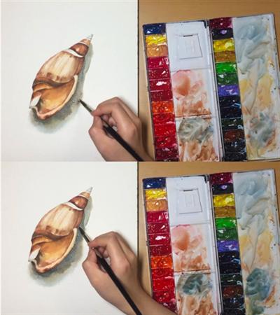 海螺怎么画?超级详细的水彩过程分享