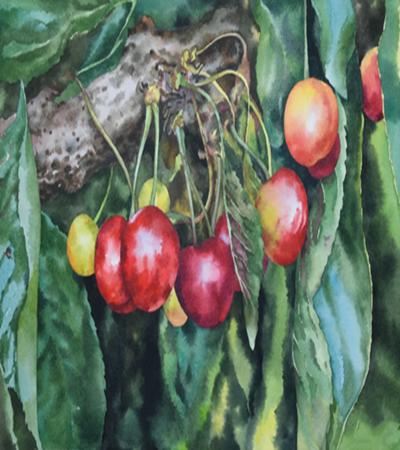 樱桃怎么画?超写实樱桃的画法是什么?