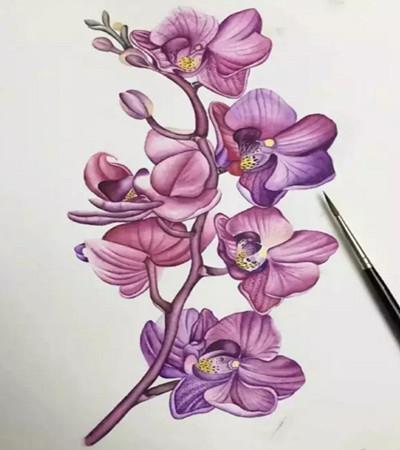 蝴蝶兰怎么画?水彩绘画步骤有几步?