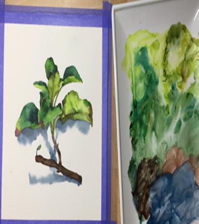 鼠尾草怎么画?详细的绘画流程是什么?