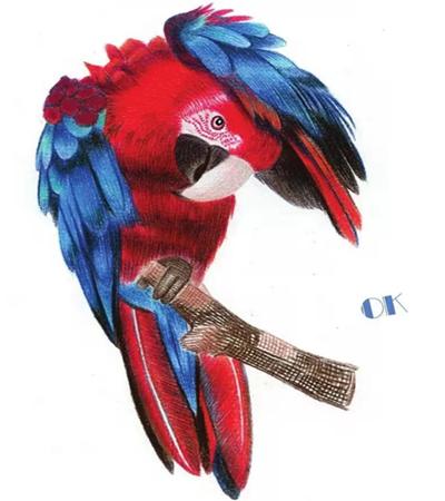 金刚鹦鹉怎么画?有哪些绘画步骤?