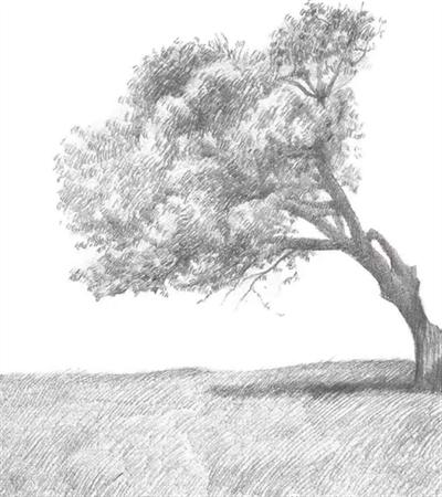 原野风景怎么画?树木的简单画法是什么?