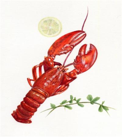 龙虾怎么画?有哪些绘画步骤?