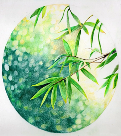 青翠的竹叶怎么画?彩铅绘画步骤有几步?