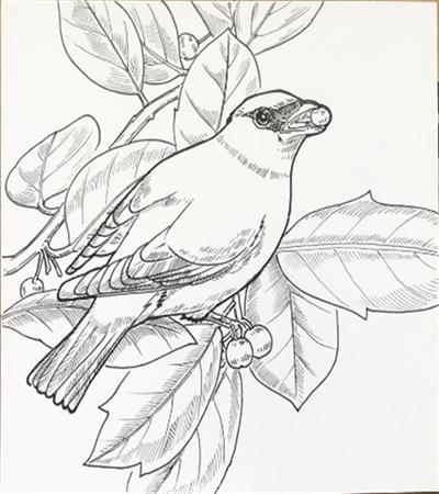 十二黄怎么画?太平鸟的简笔画步骤有几步?