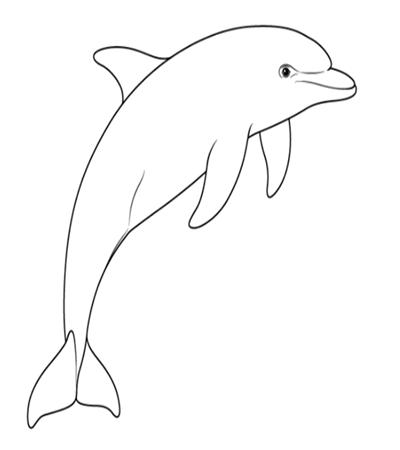海豚怎么画?简笔画步骤有几步?